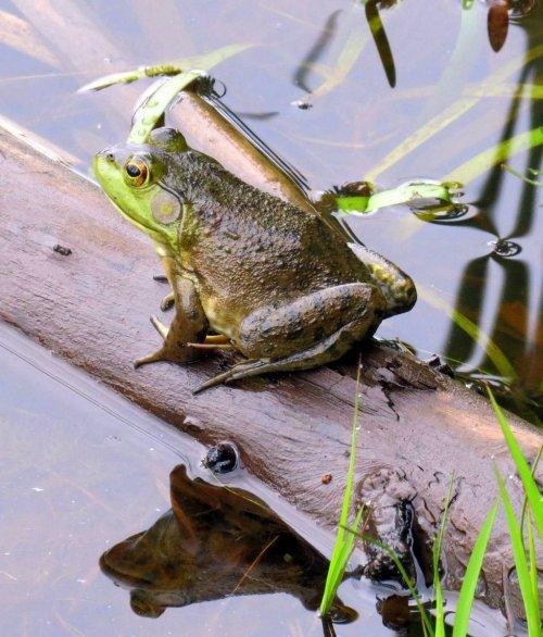 5. Frog on a Log