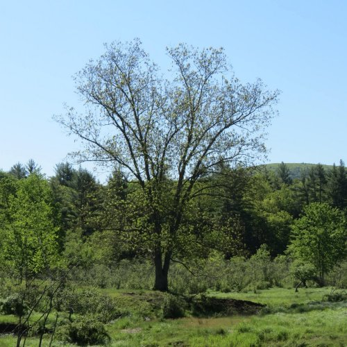 5. Lone Tree