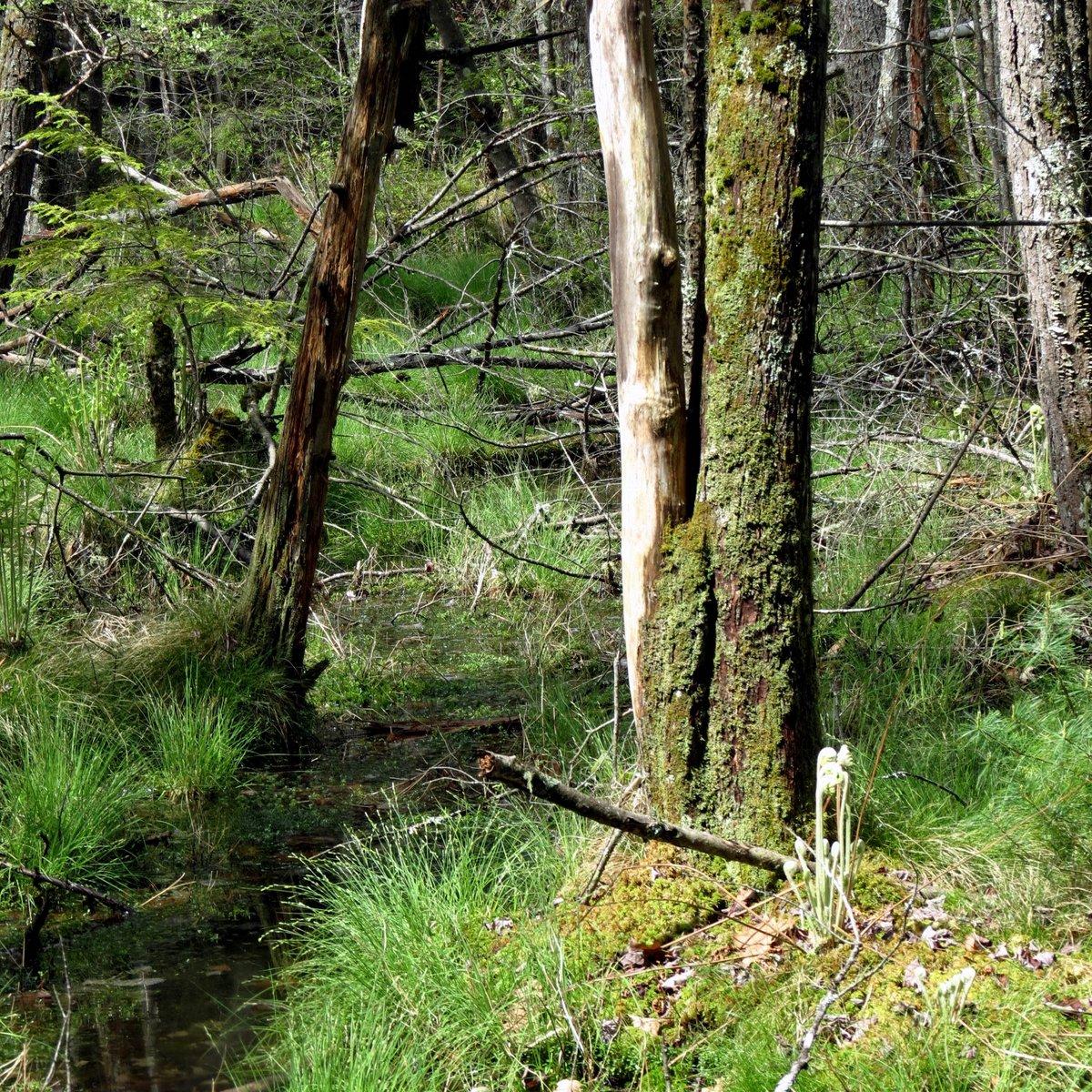 6. Old Beaver Pond