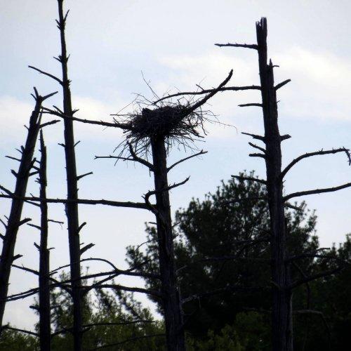 9. GBH Nest