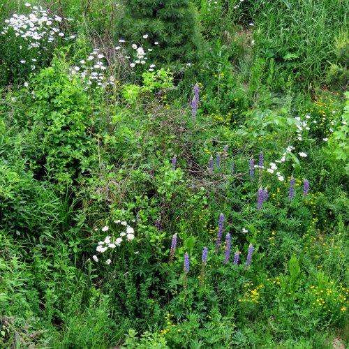 10. Ashuelot Wildflowers