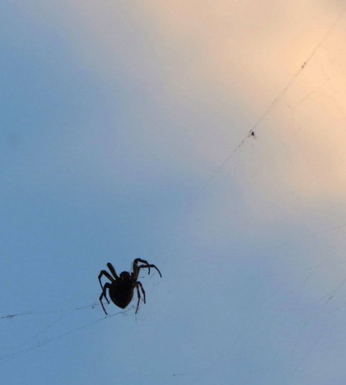 10 Spider Silhouette