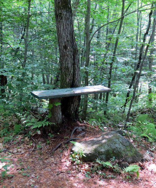 3. Forest Bench