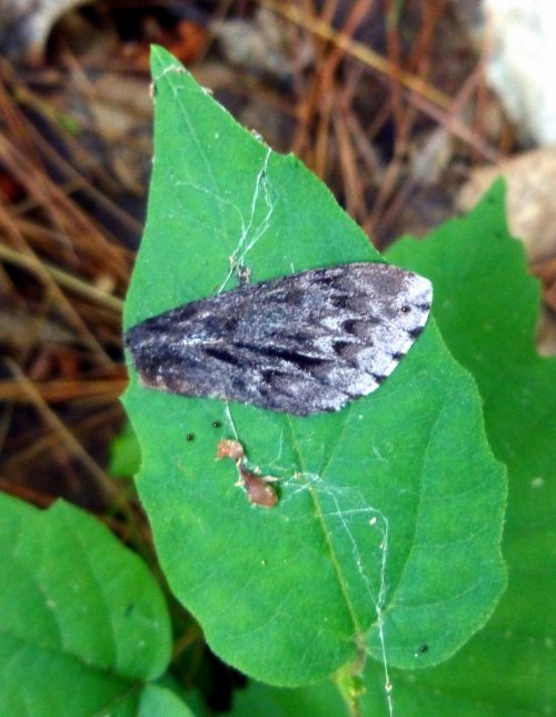 5. Moth Wing