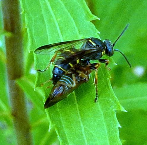 5. Unknown Wasp