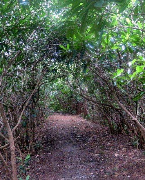 6. RSP Trail
