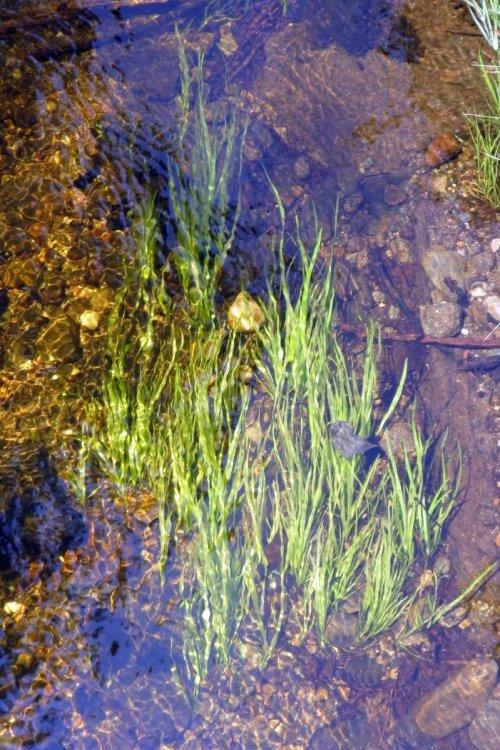 8. Grass Under Water