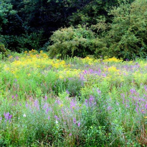 1. Meadow