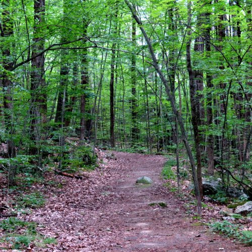 12. Trail
