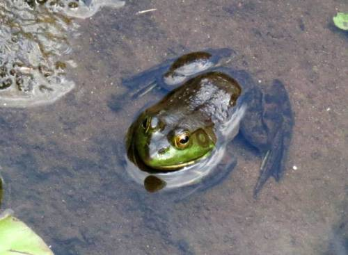 5. Frog on a Rock