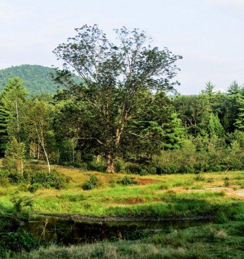 6. Lone Tree