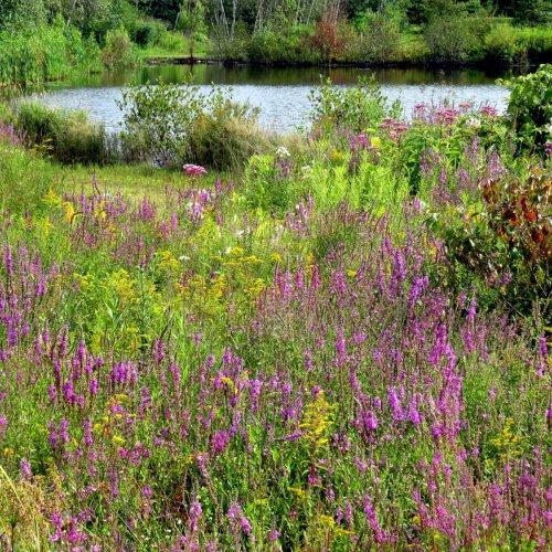 6. Meadow