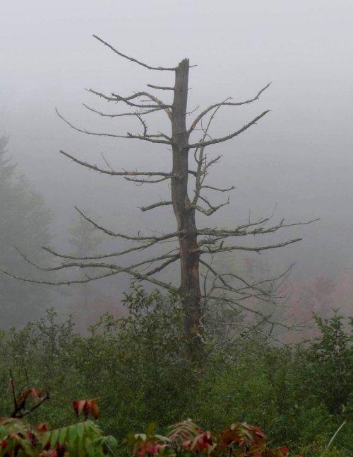 1. Blue Heron Tree