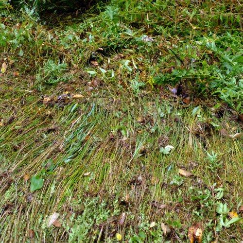3. Flattened Grass