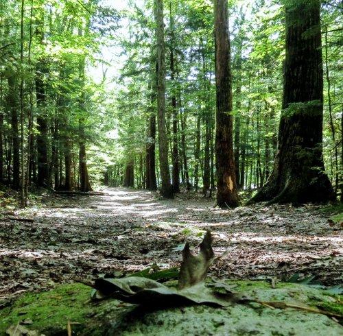 6. Trail View