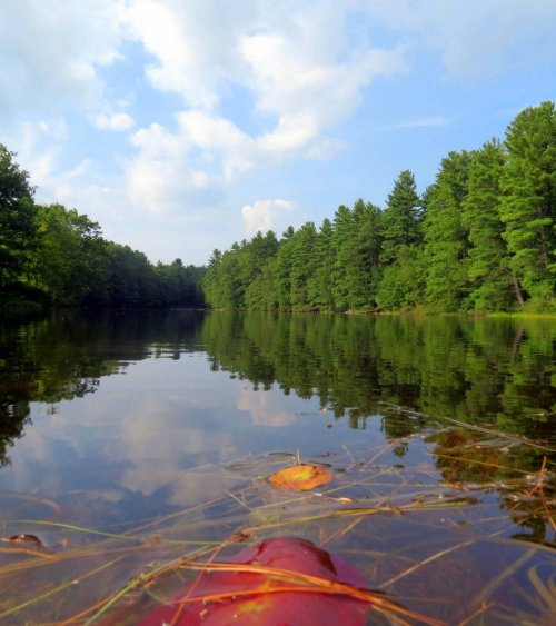 8. Pond View