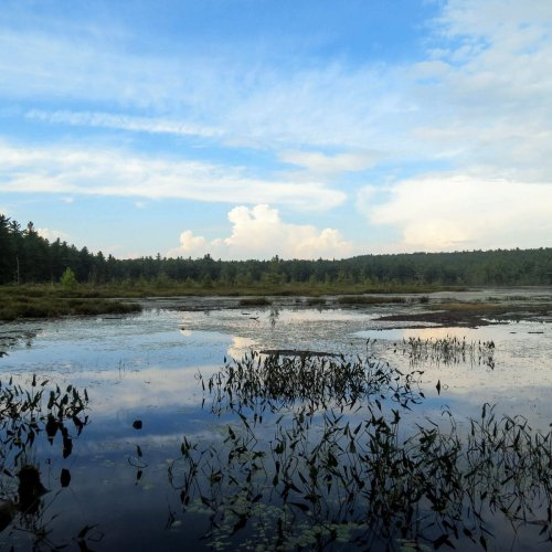 9. Pond View