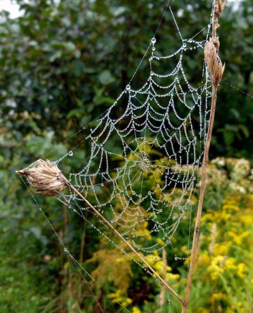 Dewy Web 2