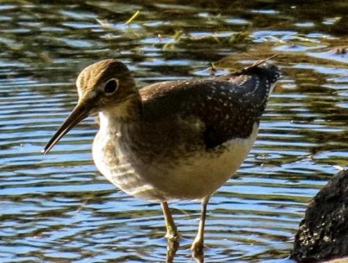 Unknown Wading Bird 2-2