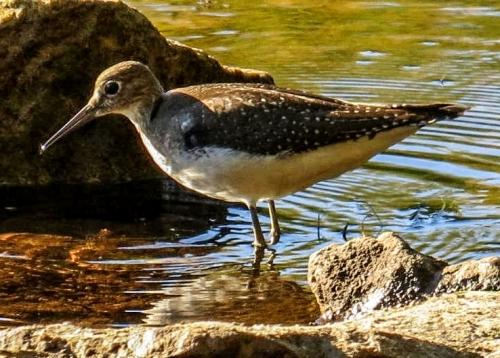 Unknown Wading Bird