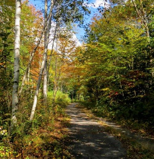 1. Abandoned Road Start