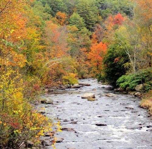 11. Branch River