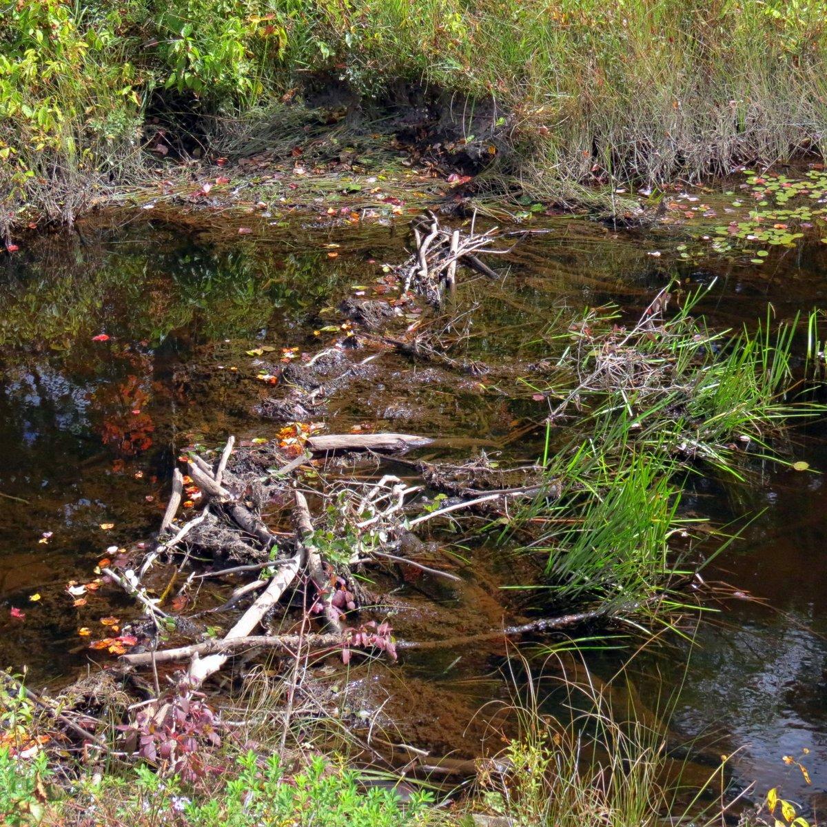 15. Beaver Dam