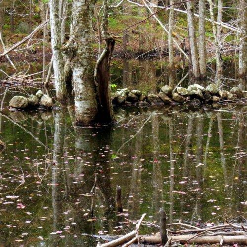 15. Beaver Pond