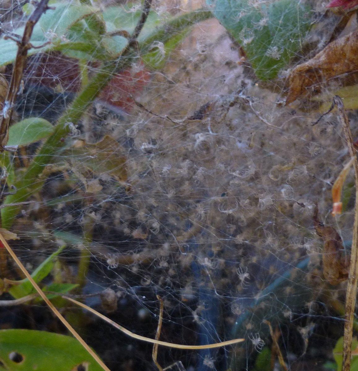 2. Baby Spider Nest