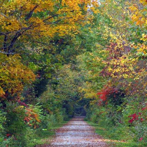 2. Rail Trail