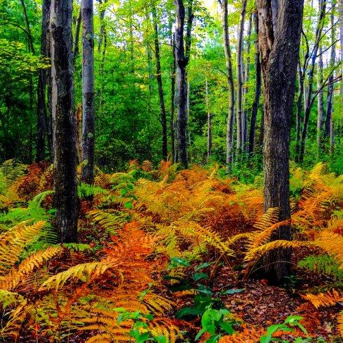 3. Fall Ferns