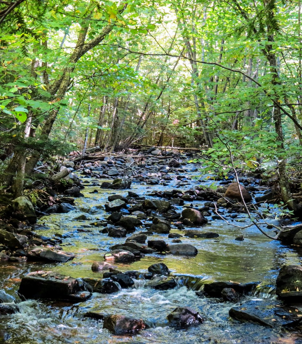 4. Beaver Brook