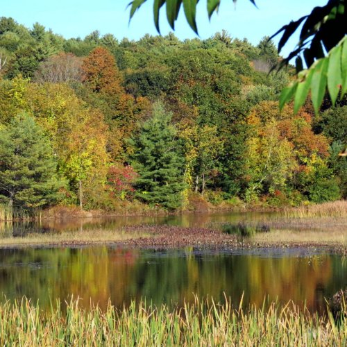 7. Pond Color