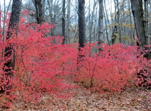 4. Burning Bushes