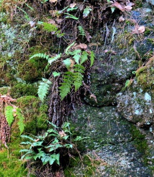 4. Plant Covered Boulder