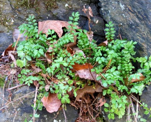 4. Unknown Plant on Ledge