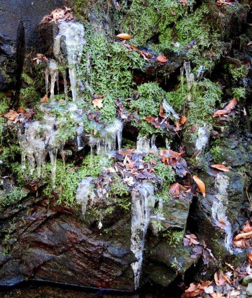 5. Icy Liverworts