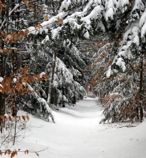 1. Snowy Trail