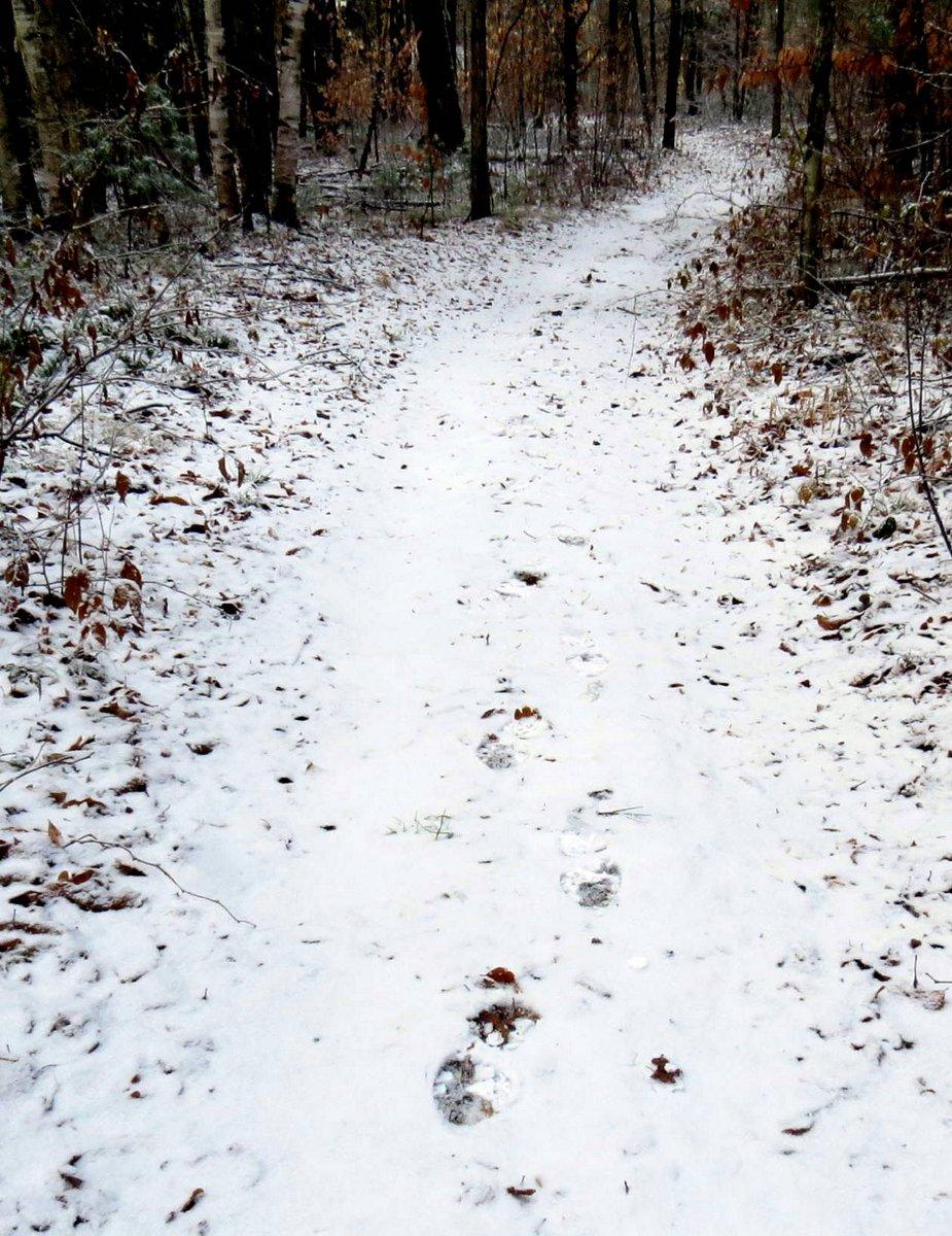 10. Footprints