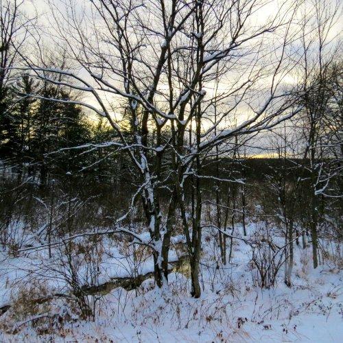 11. Snowy Trees