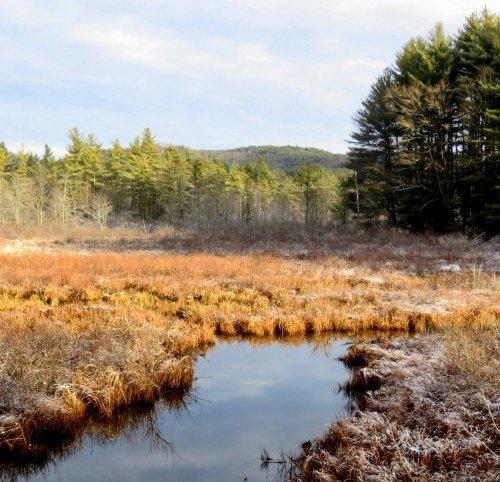 14. Wetland View-2