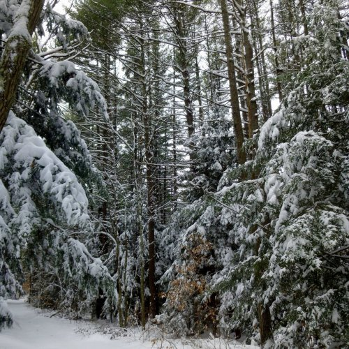 2. Snowy Forest