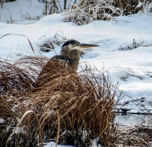 4. GBH in Snow