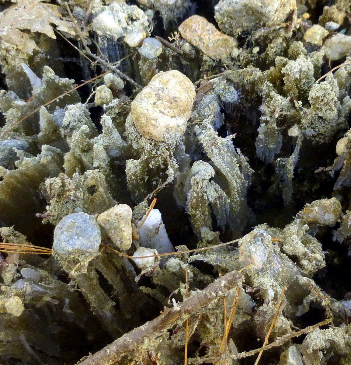 4. Ice Pillars
