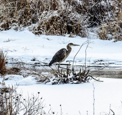 5. GBH in Snow