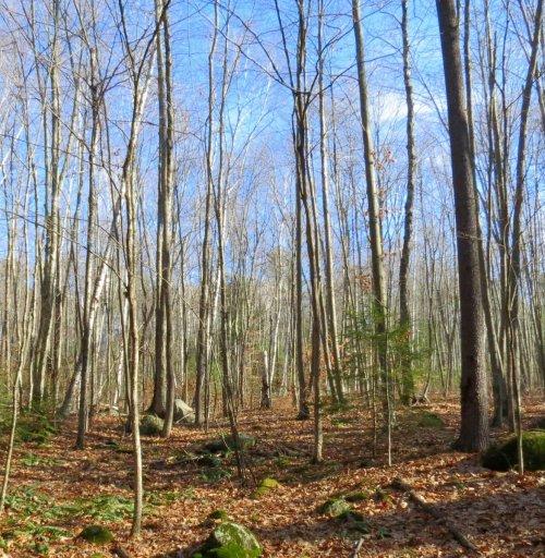 6. Hilltop Wood Lot