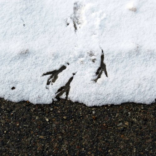 7. GBH Tracks in Snow