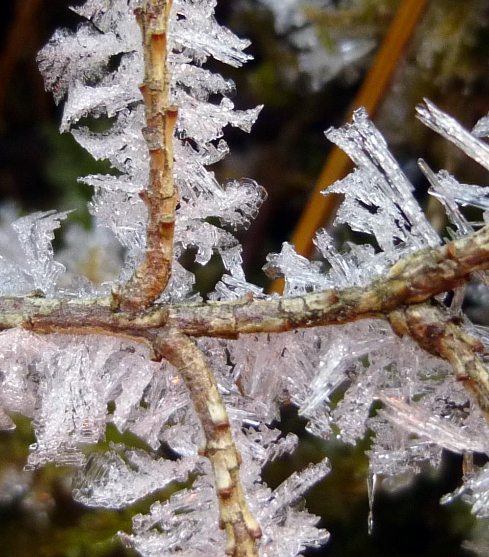 7. Hoar Frost