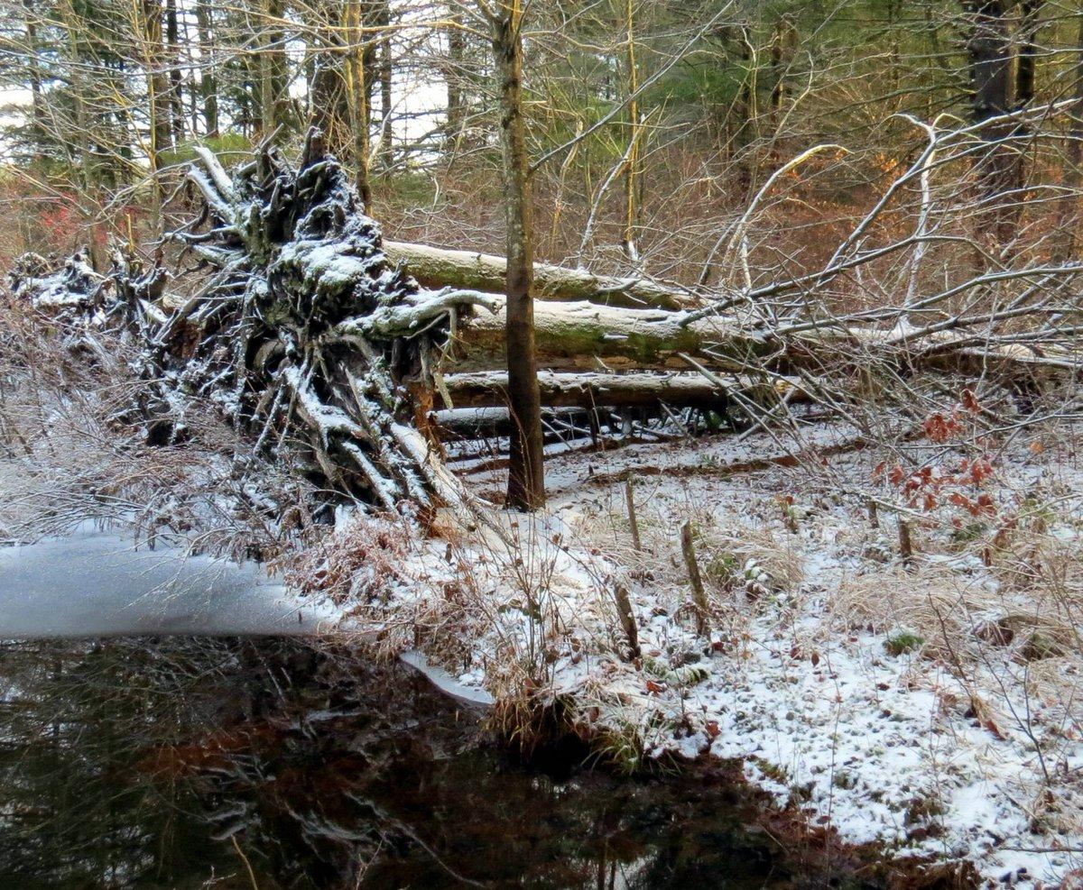 8. Fallen Trees