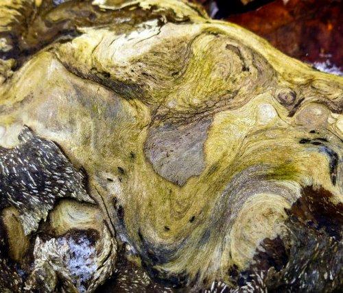 9. Birch Log